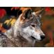 wolf одежда